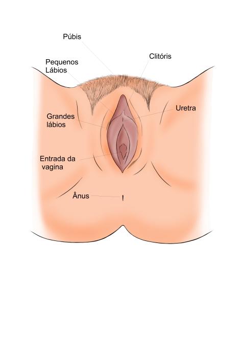 Aparelho reprodutor feminino externo (portuguêsHD)